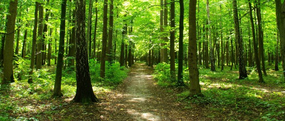 Photo of a path in a forest
