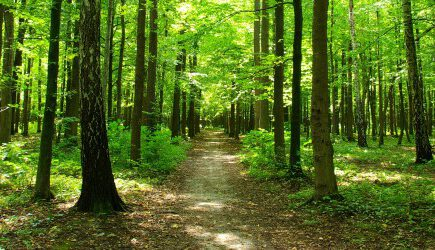 Forest pathway.